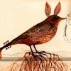 ptak-k-pouziti